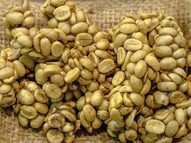 granos de cafe excremento de civeta