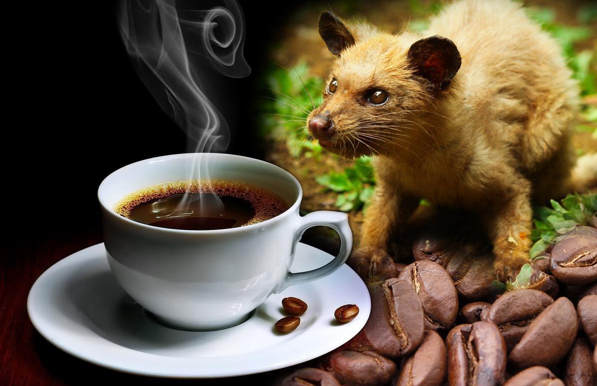 taza de cafe y una civeta