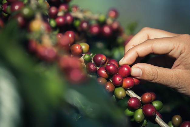 Dónde se produce el mejor café del mundo cafemalist